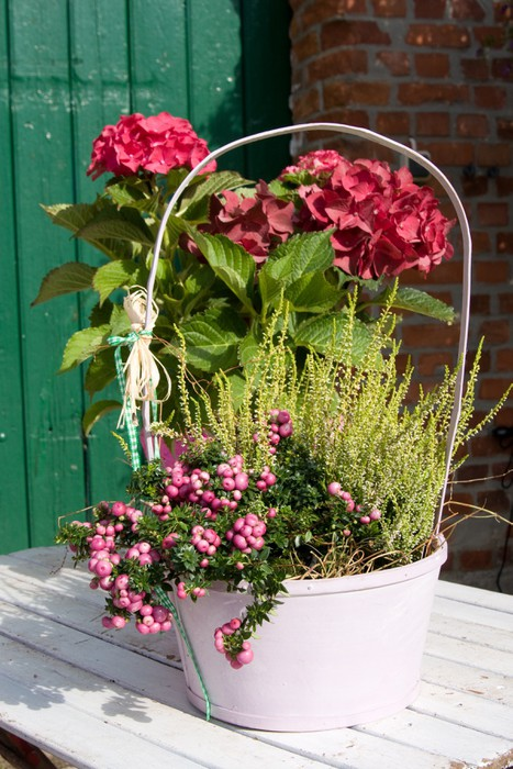 Vinylová Tapeta Gartenpflanzen - Domov a zahrada