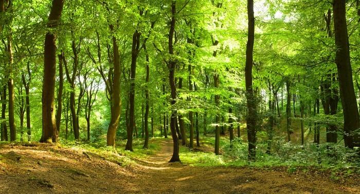 Fototapete waldweg  Fototapete Waldweg im Sommer • Pixers® - Wir leben, um zu verändern
