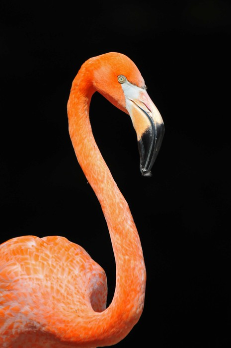 Vinylová Tapeta Flamingo 4 - Témata