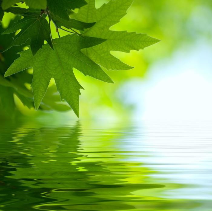 Vinylová Tapeta Zelené listy se odrážejí ve vodě, mělké zaměřením - Rostliny