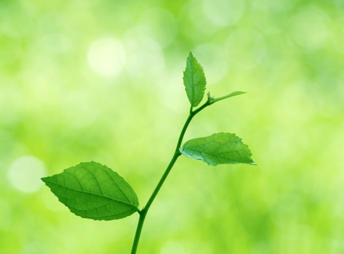 Vinylová Tapeta Zelené listy s přirozeným - Témata