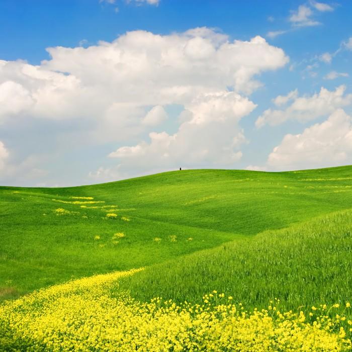 Sticker paysage champ vert avec des fleurs jaunes for Paysage vert
