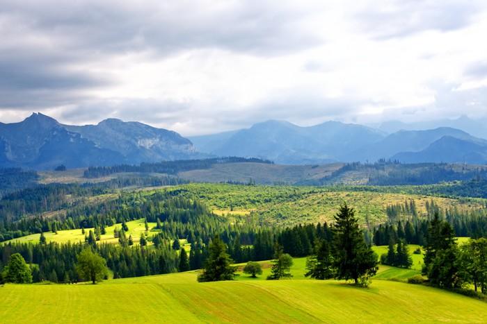Carta da parati verde valle in alta montagna pixers for Carta da parati per casa in montagna