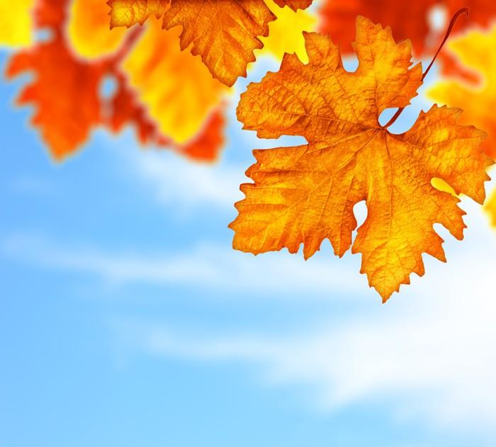 Vinylová Tapeta Krásné podzimní strom listy hranice pozadí - Roční období