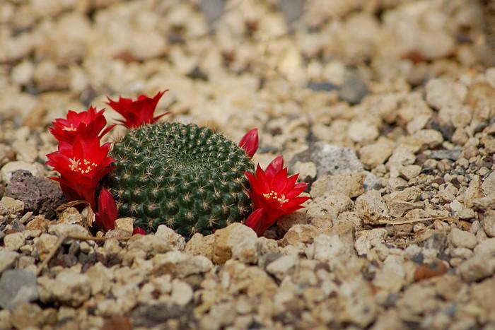 Vinylová Tapeta Kaktus - Rostliny
