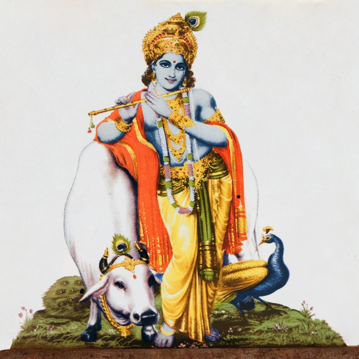 Image Of Hindu God Krishna With Cow Peacock Flute Wall