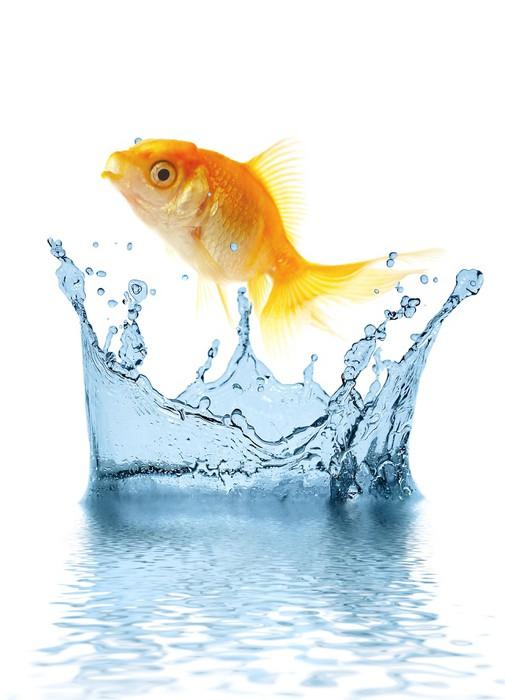 Vinylová Tapeta Zlato malé ryby vyskočí z vody - Vodní a mořský život