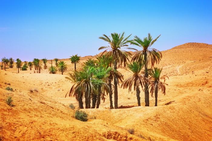 høy ørken dating