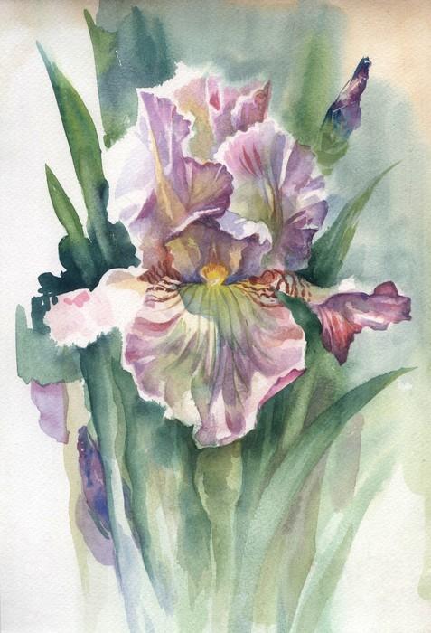 Sticker aquarelle fleur collection iris pixers nous for Aquarelle fleurs livraison gratuite