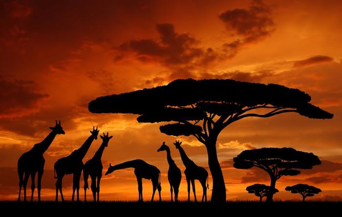 Vinylová Tapeta Stádo žiraf v zapadajícím slunci - Témata