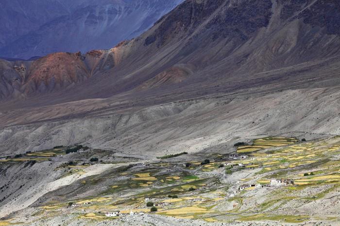 Himalayan oasis – Ladakh, Jammu & Kashmir, India Vinyl Wallpaper - Themes