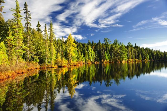 Vinylová Tapeta Forest odráží v jezeře - Roční období
