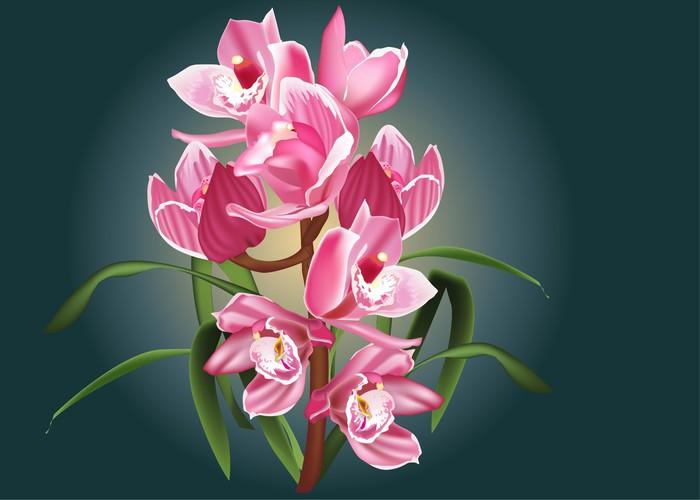 Vinylová Tapeta Krásné růžové orchideje květ větev - Květiny