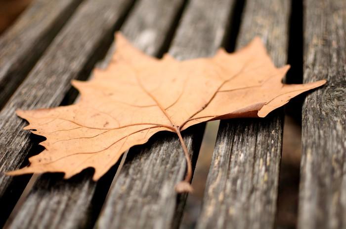 Vinylová Tapeta Podzimní listí - Roční období