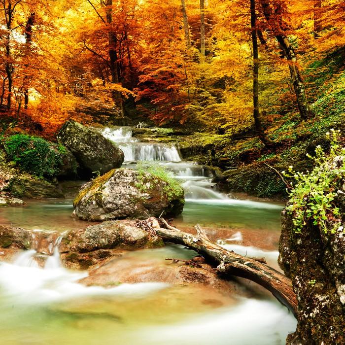 Papier Peint Vinyle Automne ruisseau bois avec des arbres jaunes - Cascades