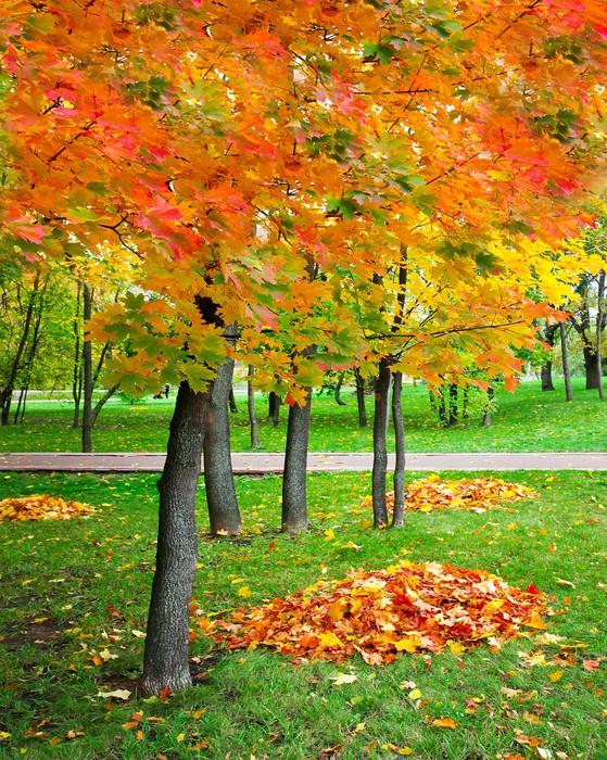 Vinylová Tapeta Krásný podzimní park - Roční období