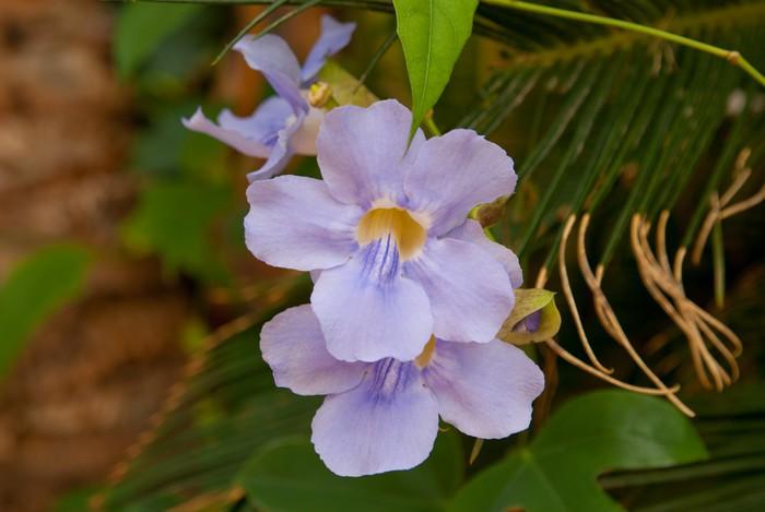 Nálepka Pixerstick Fialová barva orchidej květina v zahradě - Květiny