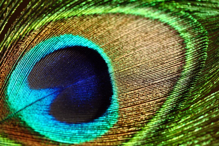 Pixerstick Aufkleber Nahaufnahme einer Pfauenfeder - Grafische Elemente