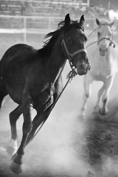 Vinylová Tapeta Koně běží volně na rodeo, převeden s přídavkem obilí - Amerika