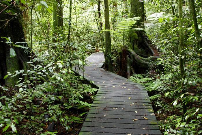 Vinylová Tapeta Tropical forest - Témata