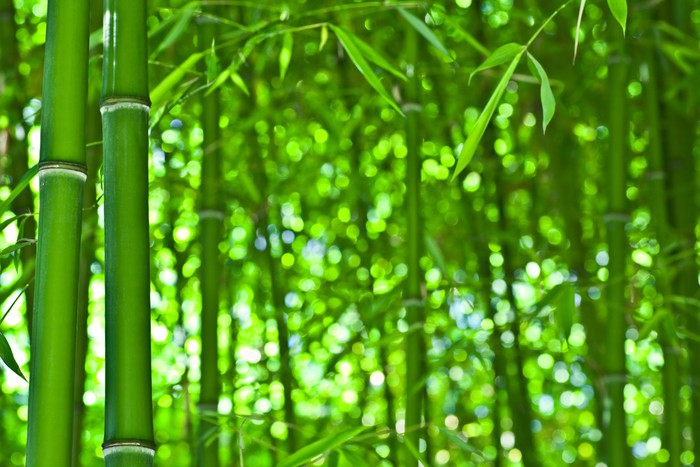 Zen bamboo forest Wall Mural Pixers We live to change