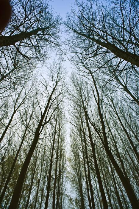 Papier peint motifs cime des arbres pixers nous - Papier peint motif arbres ...