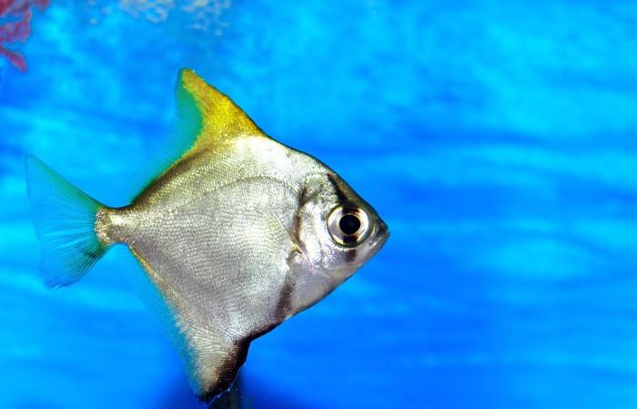 Vinyl Behang Kleurrijke vissen in het aquarium zout water wereld - Onderwater