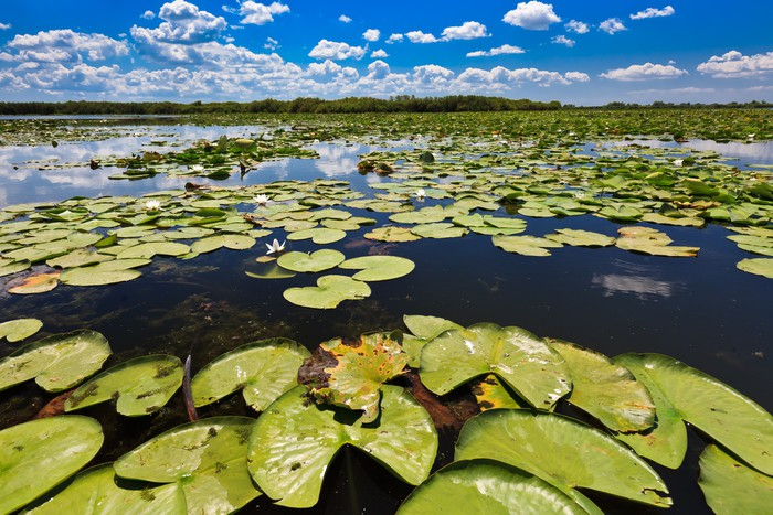 danube delta The danube delta is a rich but threatened ecosystem, constantly remodeled by natural and human activities.