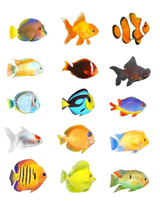 papier peint grande collection de poissons tropicaux sur un fond blanc pixers nous vivons. Black Bedroom Furniture Sets. Home Design Ideas