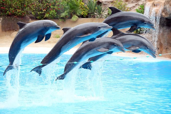 Vinylová Tapeta Pět delfíni jumping - Štěstí
