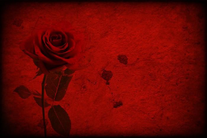 Adesivo texture rossa con rosa rossa u pixers viviamo per il