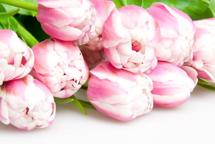 Vinylová Tapeta Pink Tulips - Roční období