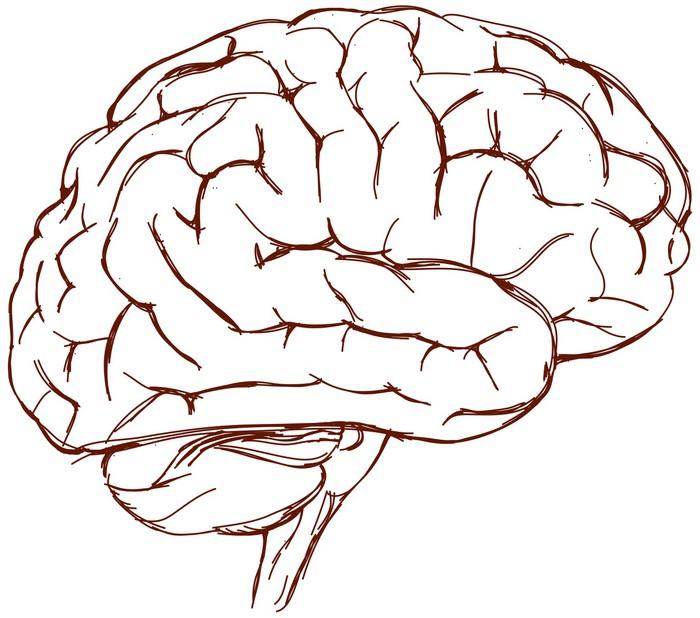 Brain sketch pixerstick sticker health and medicine