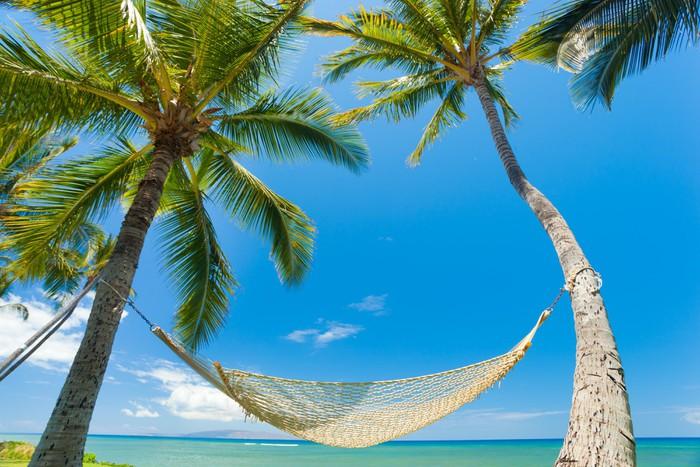 papier peint palmiers tropicaux et hamac pixers nous vivons pour changer. Black Bedroom Furniture Sets. Home Design Ideas