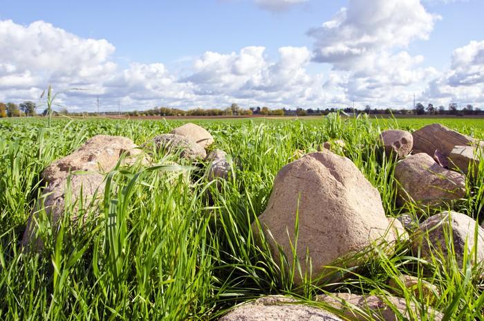 Vinylová fototapeta Kámen stoh hromada trávy surround zemědělský pozemek - Vinylová fototapeta