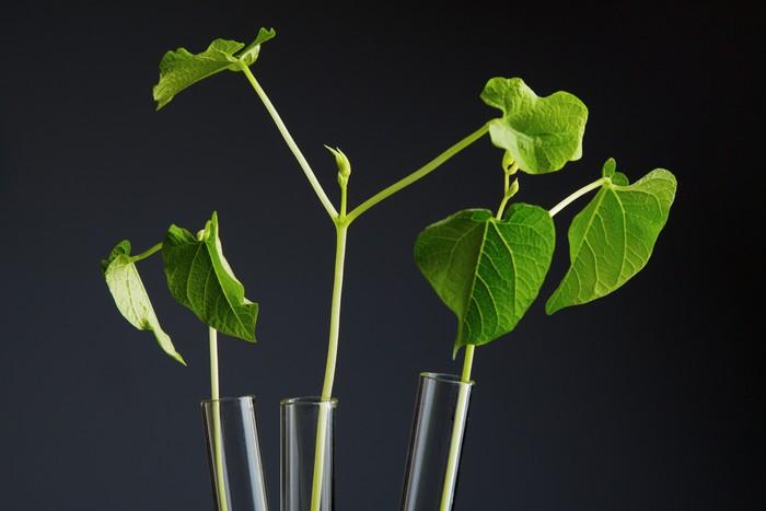 tapete pflanzen im reagenzglas pixers wir leben um zu ver ndern. Black Bedroom Furniture Sets. Home Design Ideas