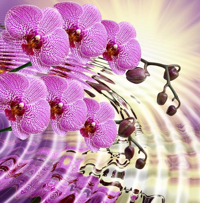 tableau sur toile gros plan d 39 une fleur d 39 orchid e pixers nous vivons pour changer. Black Bedroom Furniture Sets. Home Design Ideas