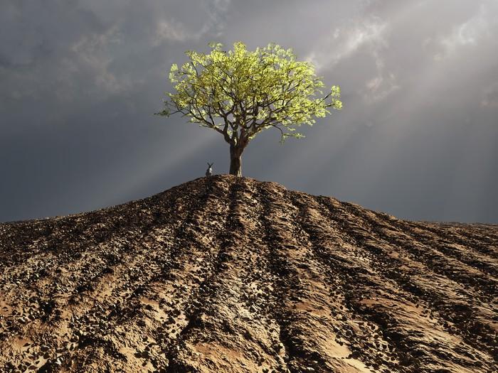 Vinylová Tapeta Osamělý strom uprostřed zorané pole - Zemědělství
