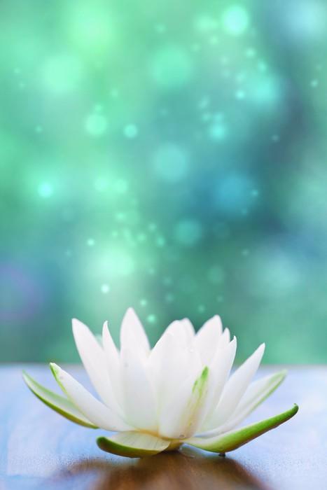 Vinylová Tapeta White water lilly květina - iStaging