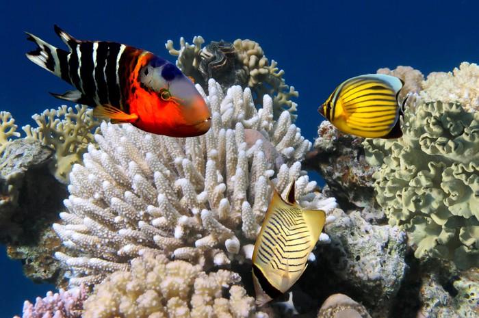 fototapete foto von einer koralle kolonie auf einem riff pixers wir leben um zu ver ndern. Black Bedroom Furniture Sets. Home Design Ideas