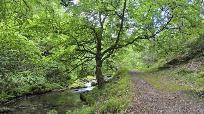 Vinylová Tapeta Paseo primaveral por el Bosque de Muniellos. - Stromy