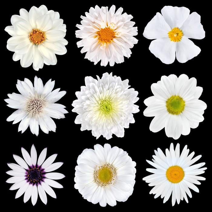 Vinylová Tapeta Různé výběr bílých květů izolovaných na černém - Květiny