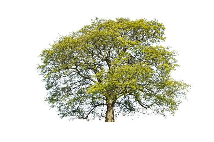 Vinylová Tapeta Letní strom izolované - Outdoorové sporty