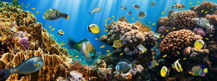 Vinylová Tapeta Coral kolonie a korálové ryby - Témata