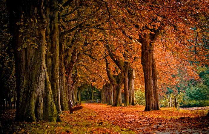 Papier Peint Vinyle Couleurs d'automne dans la forêt - Thèmes