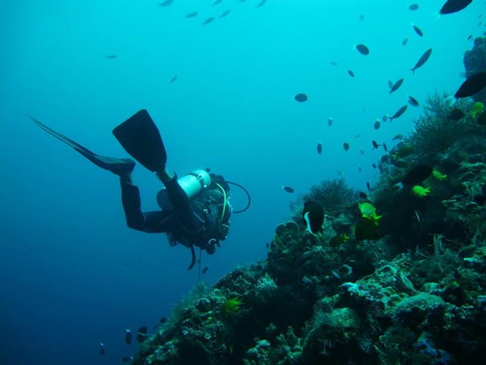 Vinylová Tapeta Potápění v moři - Témata