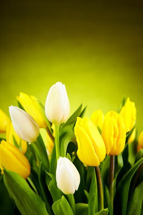 Vinylová Tapeta Žluté a bílé květy tulipánů se zelenou kopií vesmíru - Témata