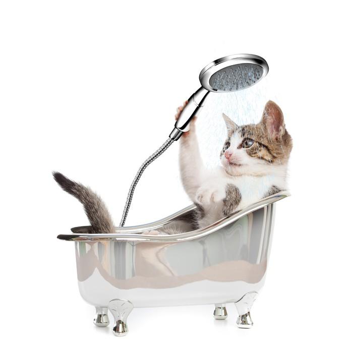 fototapete cat dusche pixers wir leben um zu ver ndern. Black Bedroom Furniture Sets. Home Design Ideas