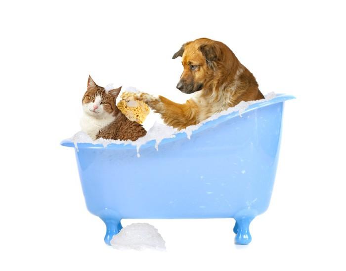 Vasca Da Bagno Per Cani : Adesivo rapido cane e gatto nella vasca da bagno u pixers