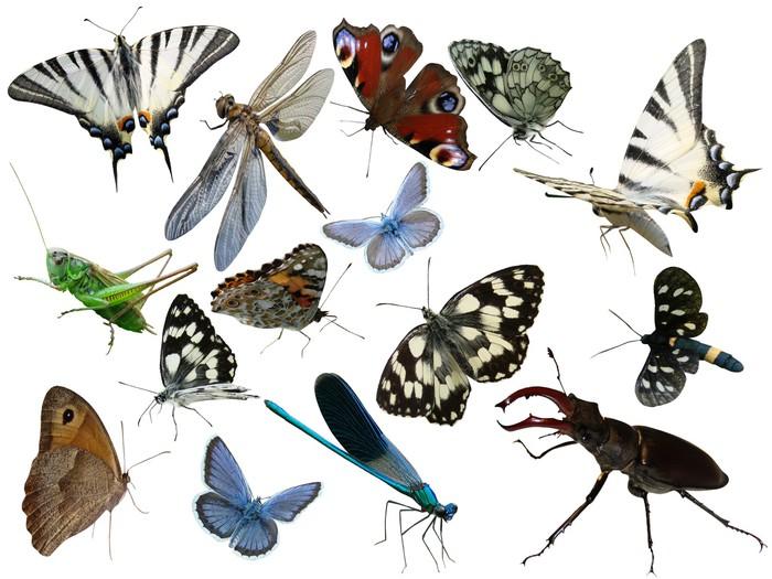Vinyltapete Schmetterlinge einer Libelle hört Insekten ist es isoliert - Andere Andere